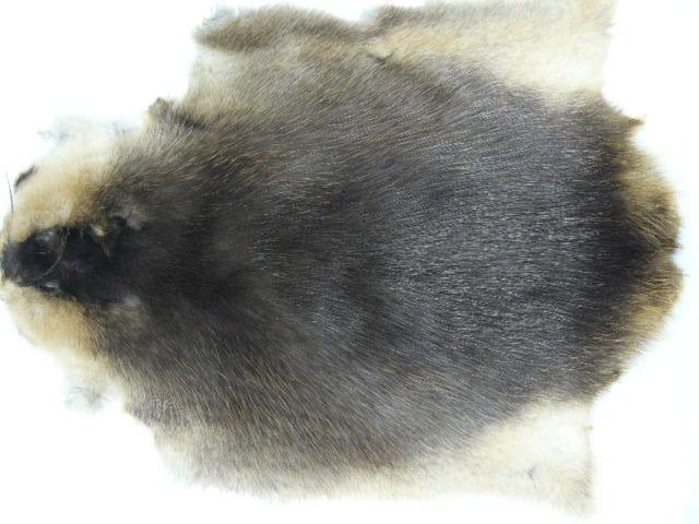Шкура рыжей, черной (редкой) ондатры