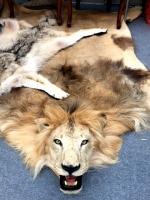 Ковер из шкуры льва