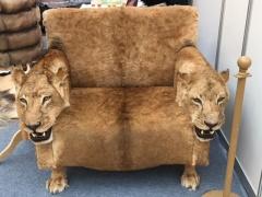Кресло из шкуры львиц с подлокотниками - голова львицы
