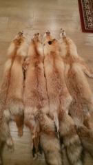 Шкура, мех лисы хвост морда