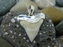 Кулон с зубом Бычьей акулы