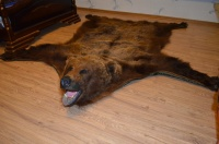 Ковер бурого медведя 2 м