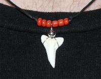 Амулет с зубом Синей акулы кр